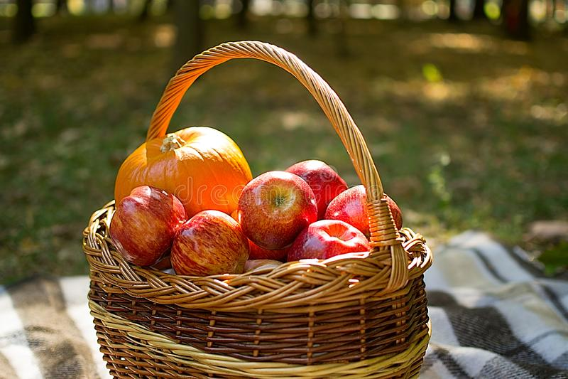 Autumn harvest. pumpkin, red ripe apples in a wicker basket. basket stands on a plaid plaid, the background is blurred. Autumn harvest. pumpkin, red ripe apples stock images
