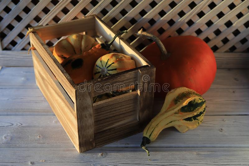 Autumn harvest of pumpkins in a box. royalty free stock images