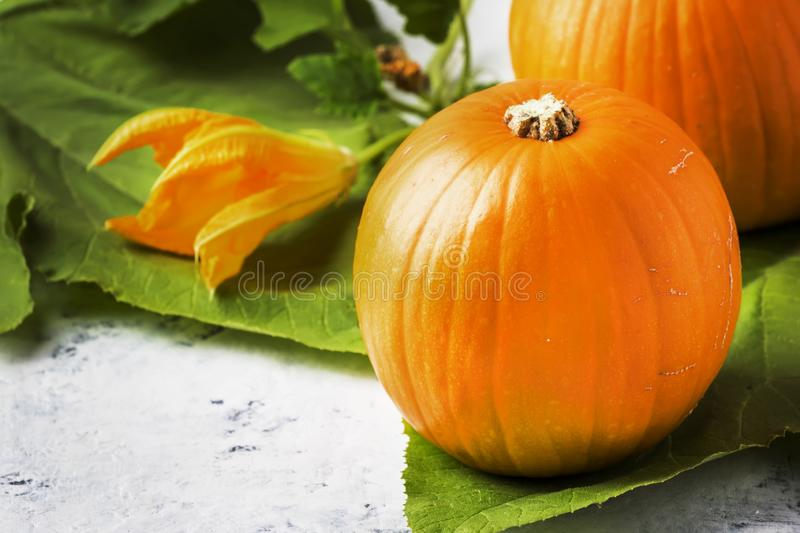 Autumn harvest of pumpkins with flowers and leaves, white kitchen table, copy space, selective focus stock images