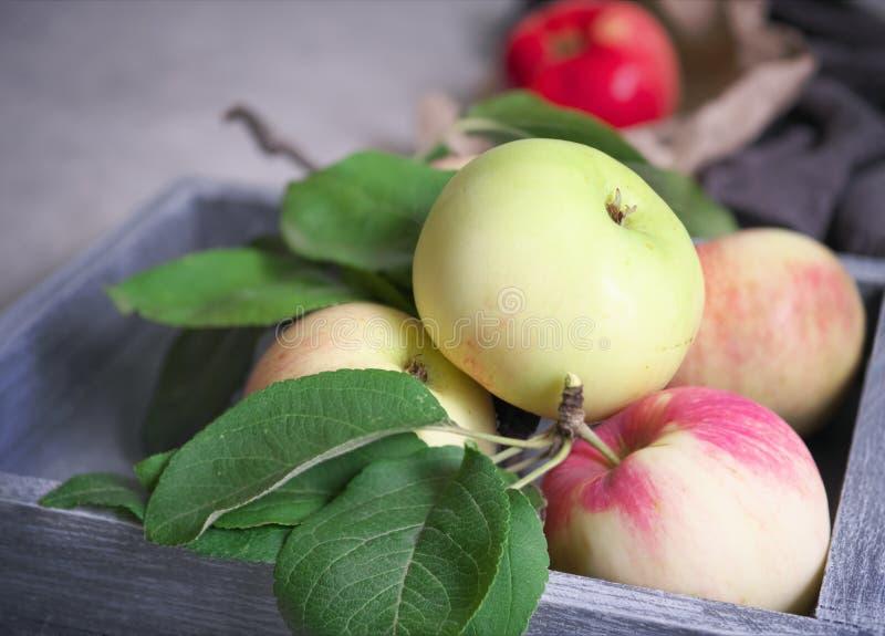 Autumn harvest: ripe, fragrant red-green apples in a wooden, gray box. The Autumn harvest: ripe, fragrant red-green apples in a wooden, gray box stock images