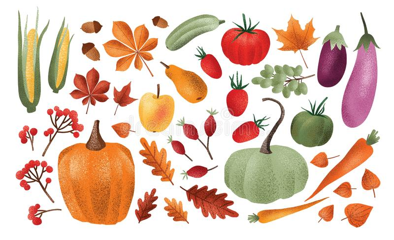 Autumn harvest set. Collection of ripe delicious vegetables, fresh fruits, berries, fallen leaves, acorns isolated on vector illustration