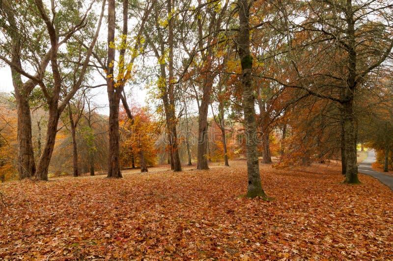 Autumn Harvest Time imagem de stock royalty free
