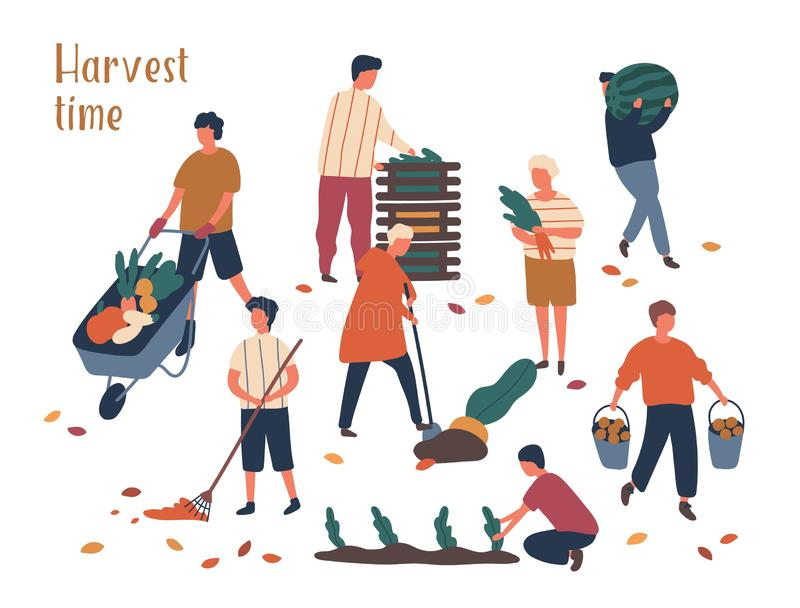 Autumn harvest time flat vector illustrations set. Farmers working in field, gathering crop. Fruits and vegetables fall royalty free illustration