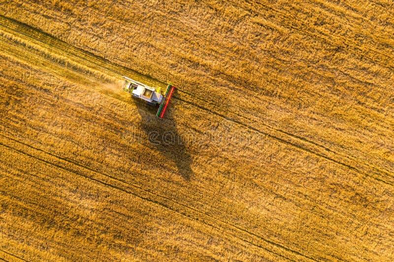 Autumn Harvest fotografia de stock