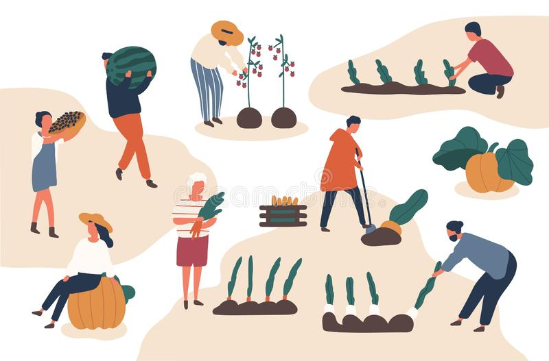 Autumn harvesting flat vector illustrations set. Farmers working in field. Fruits and vegetables crops fall season stock illustration