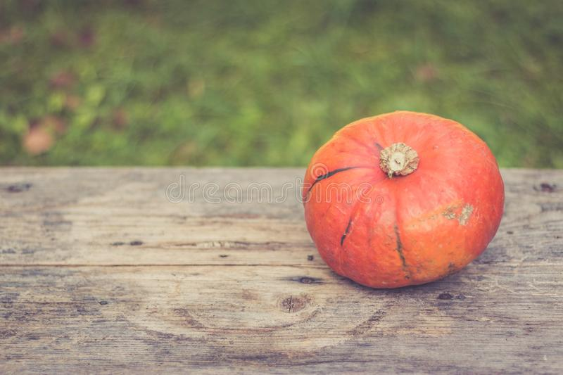 Autumn and harvesting: Pumpkin is lying on a rustic, wooden table. Text space. Orange pumpkin is lying on a rustic wooden table. Text space halloween fall autumn stock photo