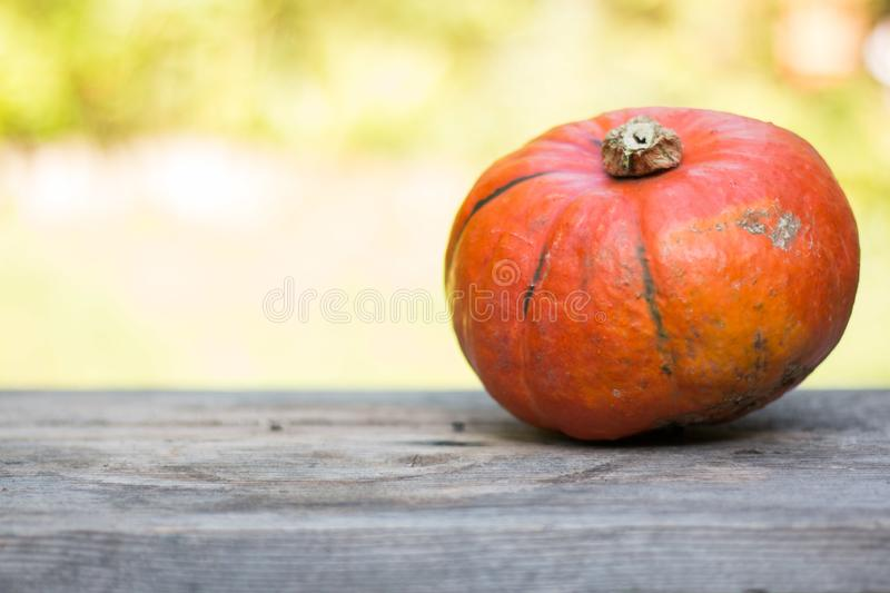 Autumn and harvesting: Pumpkin is lying on a rustic, wooden table. Text space. Orange pumpkin is lying on a rustic wooden table. Text space halloween fall autumn stock photography