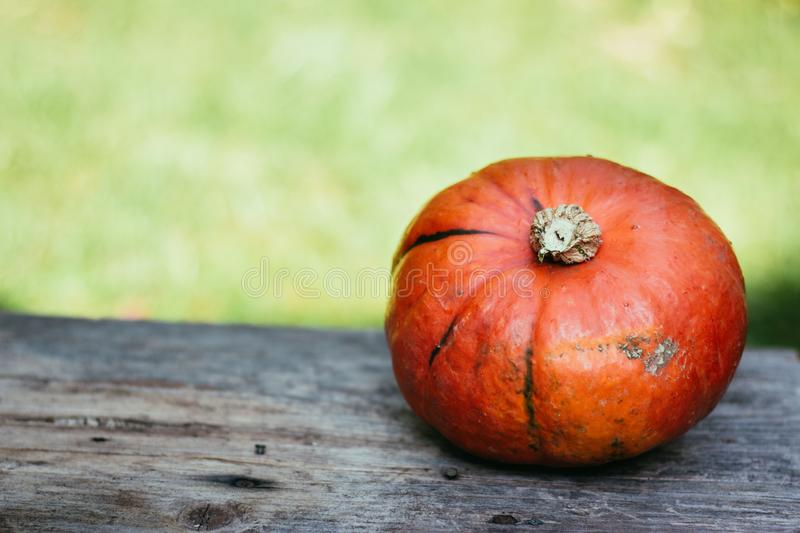 Autumn and harvesting: Pumpkin is lying on a rustic, wooden table. Text space. Orange pumpkin is lying on a rustic wooden table. Text space halloween fall autumn royalty free stock photography