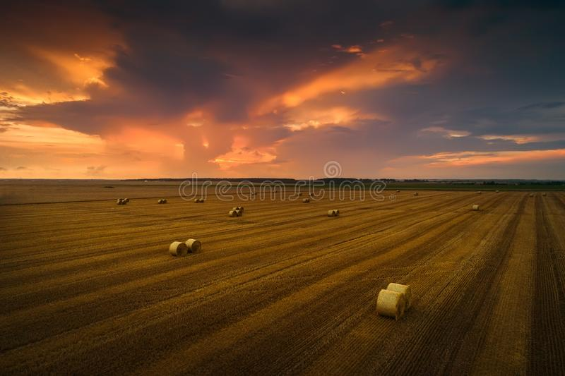 Autumn harvesting. Straw stacks on a beveled field at sunset. royalty free stock photography