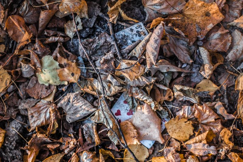 Autumn has discarded its cards. Turquoise and orange. beautiful weather. autumn forest. still life of foliage. leaf litter. dreams and reflections royalty free stock image