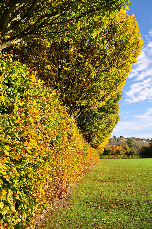 Download Autumn Hedgerow stock image. Image of details, beautiful - 20390473