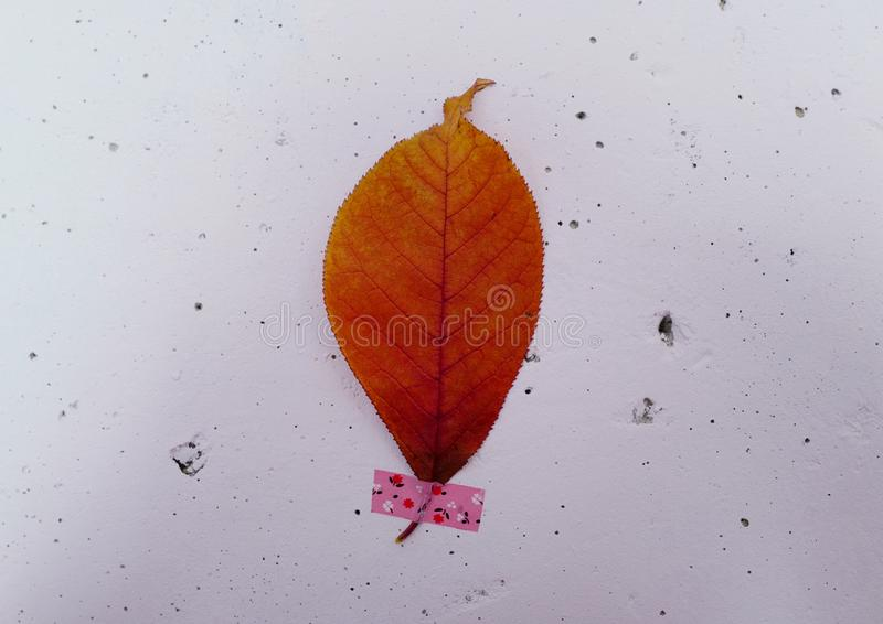 Autumn herbarium on the wall. A single leaf of a chestnut tree. Home decor stock images