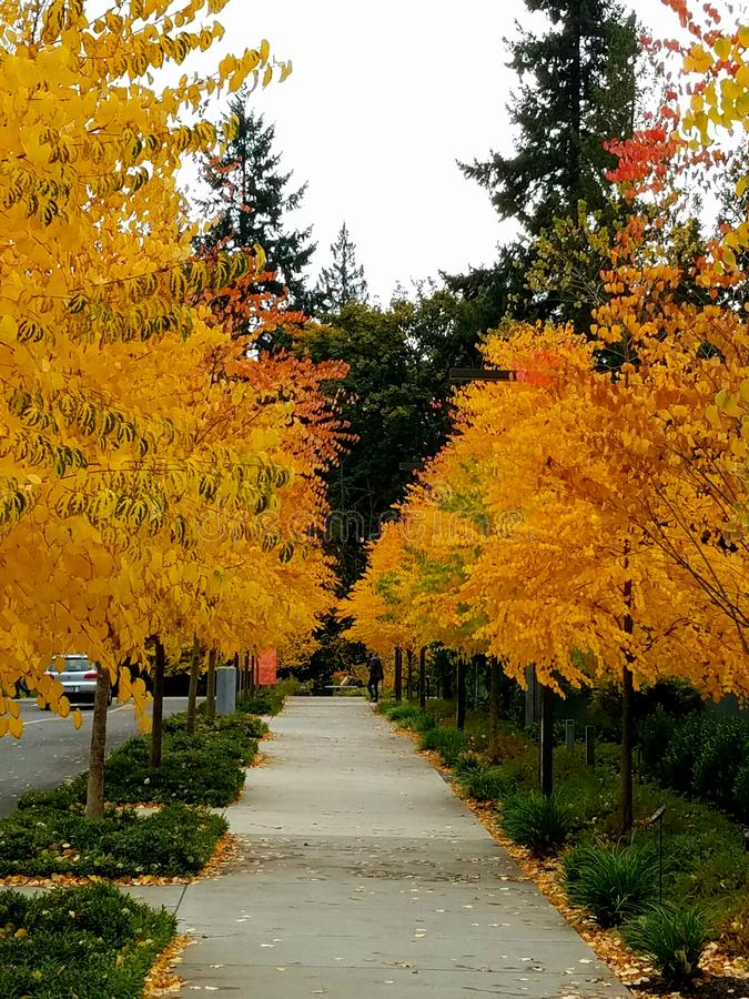 Autumn is here with golden leave row. Seasonal, yellow, greens, fall royalty free stock photo