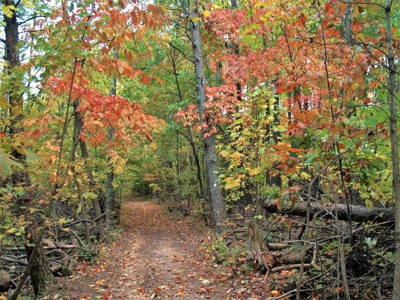 Autumn Hiking am Piloten Mountain State Park stockfoto