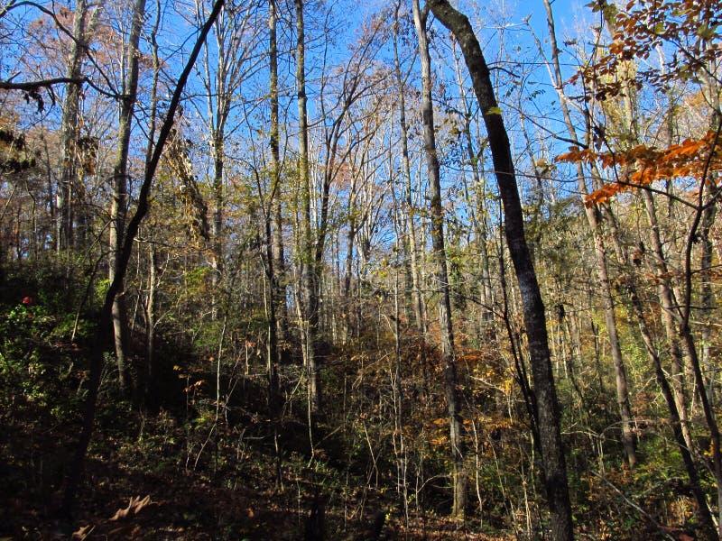 Autumn Hillside 2 stockbild