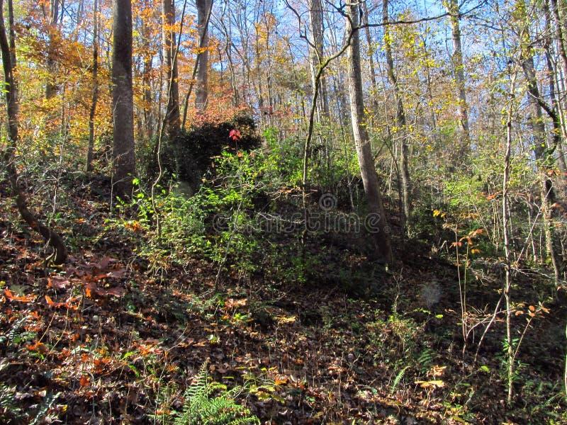 Autumn Hillside 3 image libre de droits