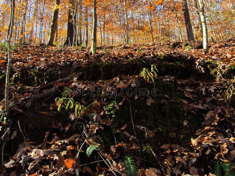Autumn Hillside 4 photo stock
