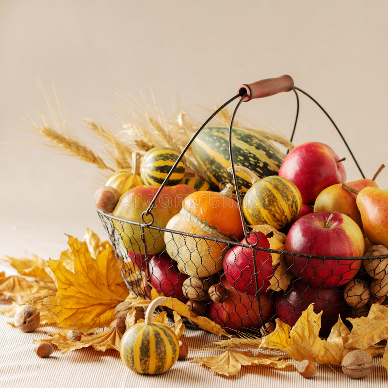 Autumn holiday Thanksgiving. Still life with pumpkin and apples, royalty free stock images