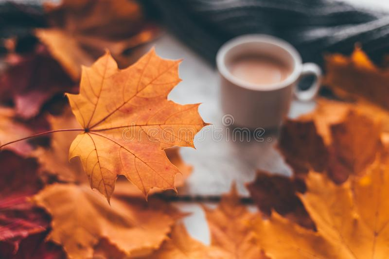 Autumn home cozy composition a cup of coffee with maple leaves. Selectine focus royalty free stock photography