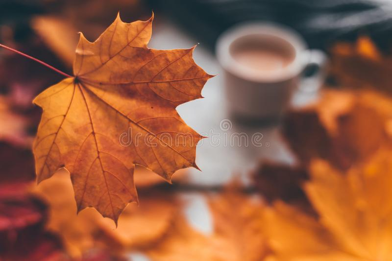Autumn home cozy composition a cup of coffee with maple leaves. Selectine focus stock photos