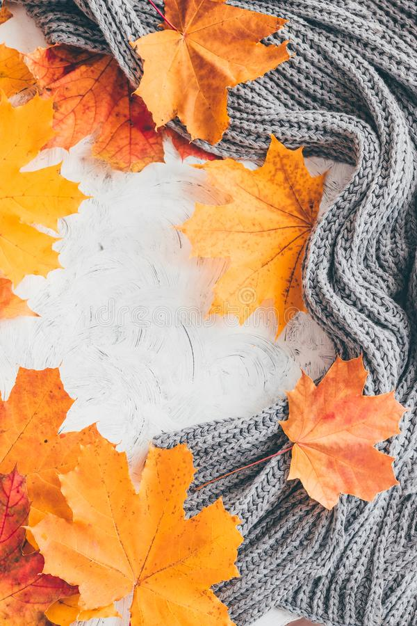 Autumn home cozy composition with maple leaves. Autumn home cozy composition  with maple leaves.Top view stock image