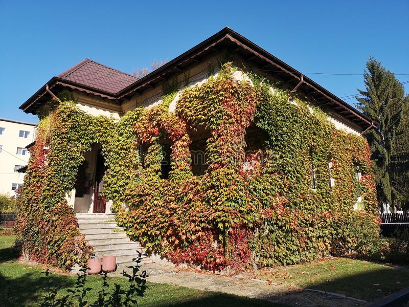 Autumn house covered in colorful ivy royalty free stock photo
