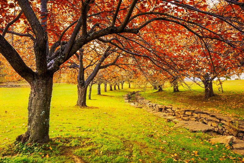 Autumn in Hurd Park, Dover, New Jersey. With fall foliage on cherry trees stock images