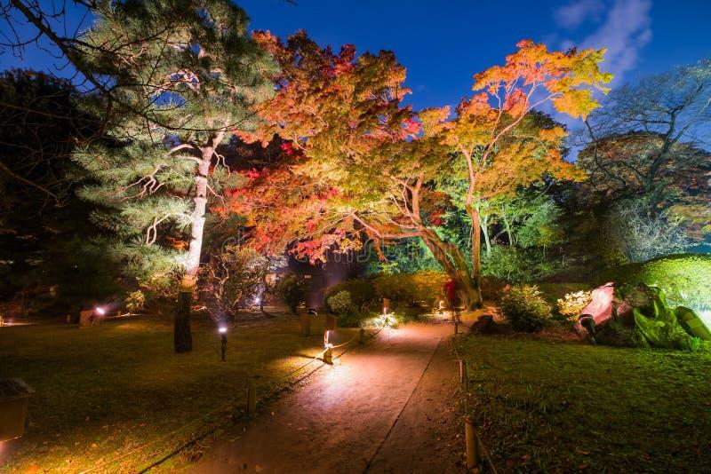 Autumn illumination. At Rikugien Garden stock photography