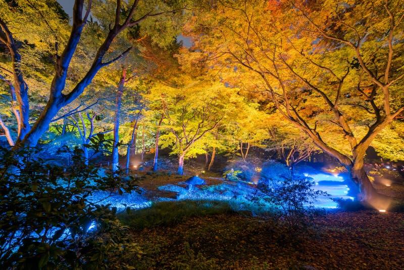 Autumn illumination stock photos