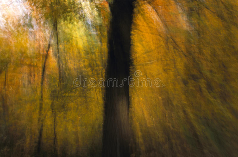Autumn Image With Tree Trunk. An interpretively blurred image of yellow autumn leaves and the trunk of a large tree royalty free stock images