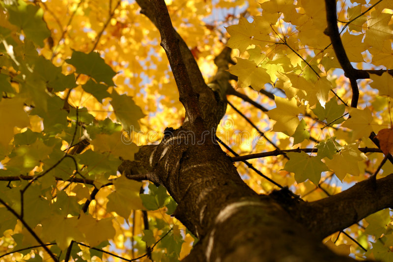 Autumn impression royalty free stock photography