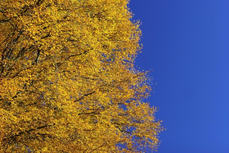 Autumn impression stock photos
