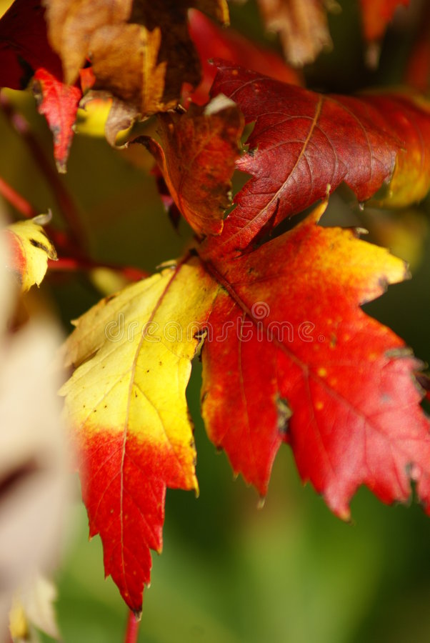 Free Autumn In A French Park Stock Images - 8490744