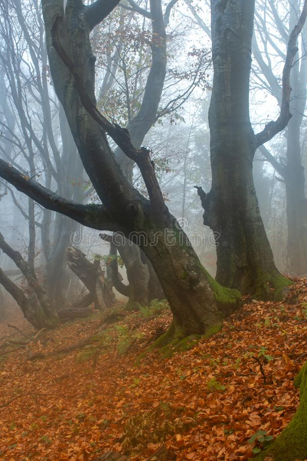 Free Autumn In A Wild Hazy Forest. Road To Nowhere. Bieszczady National Park. Royalty Free Stock Photography - 132628937