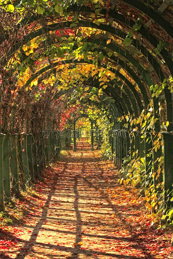 Free Autumn In Park Alley Royalty Free Stock Images - 23771289