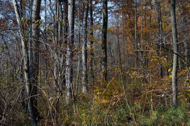 Autumn in Indiana Dunes. royalty free stock photos