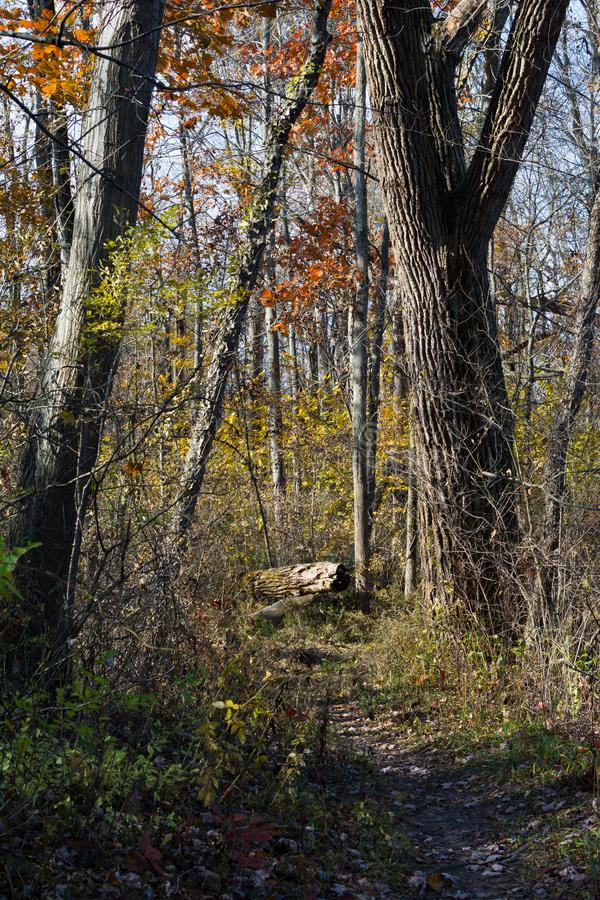 Autumn in Indiana Dunes. royalty free stock photo