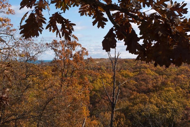 Autumn trees in Indiana Dunes State Park. Autumn in Indiana Dunes State Park royalty free stock images