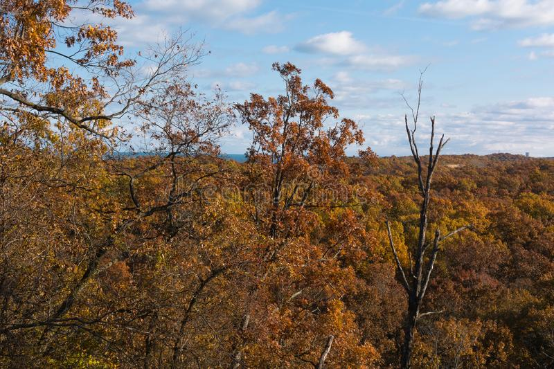 Autumn in Indiana Dunes State Park. stock images