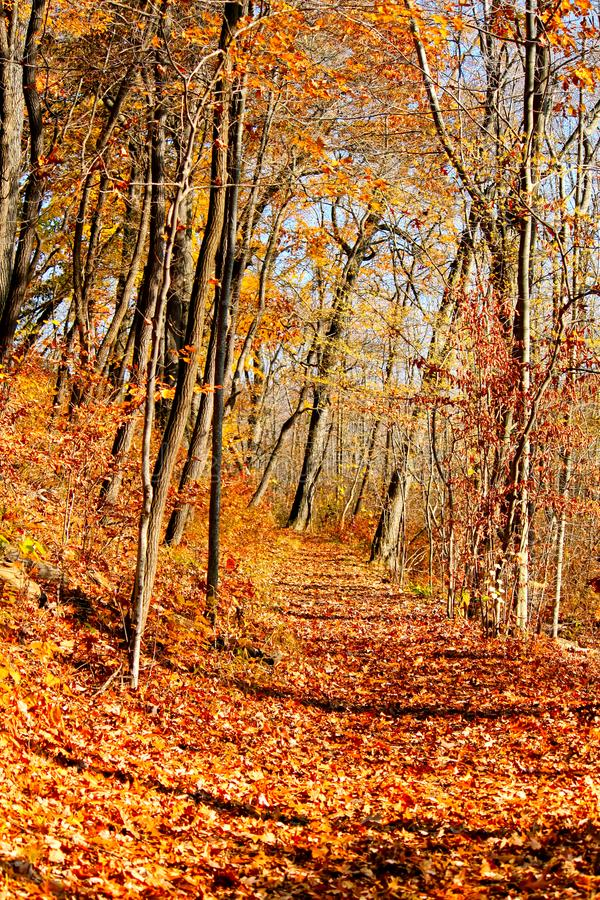 Autumn in an Indiana forest with shadows and fallen leaves across a path stock photography