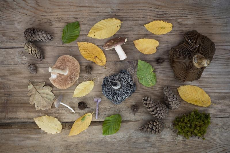Autumn items on the wooden desk royalty free stock photography