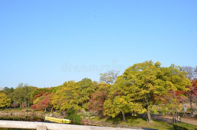 Autumn Japan kleuren rode geel en groen royalty-vrije stock fotografie