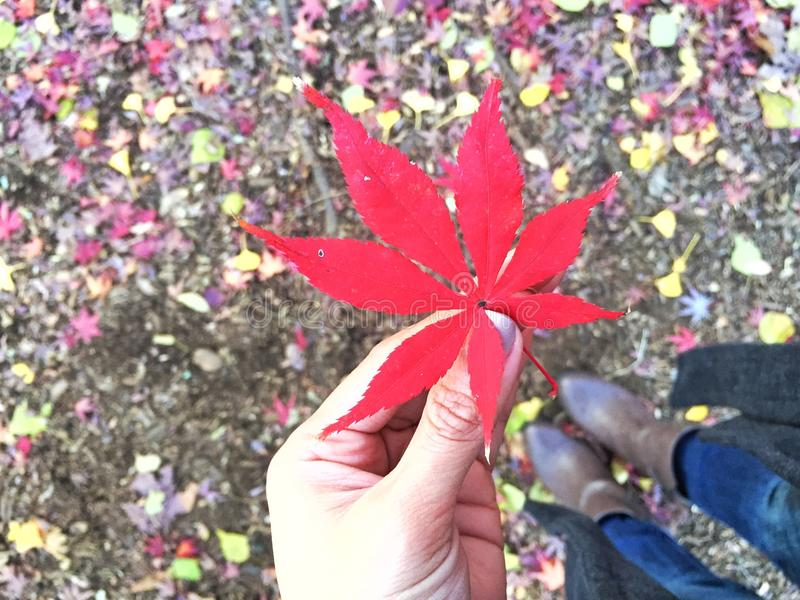 Autumn in Japan royalty free stock images