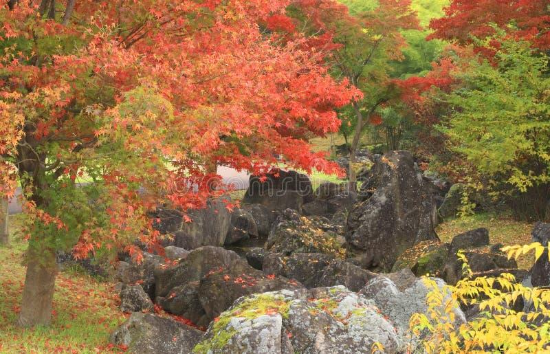 Autumn Japanese garden stock image