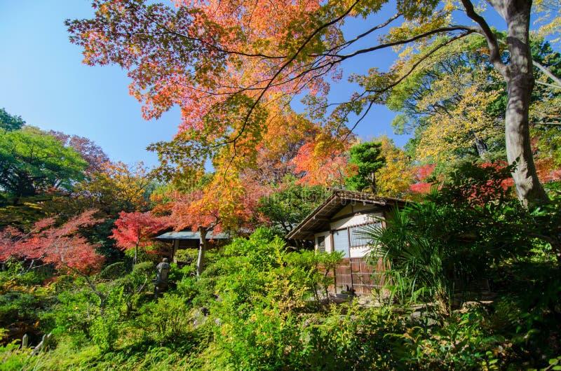 Autumn Japanese Garden con l'acero fotografia stock libera da diritti