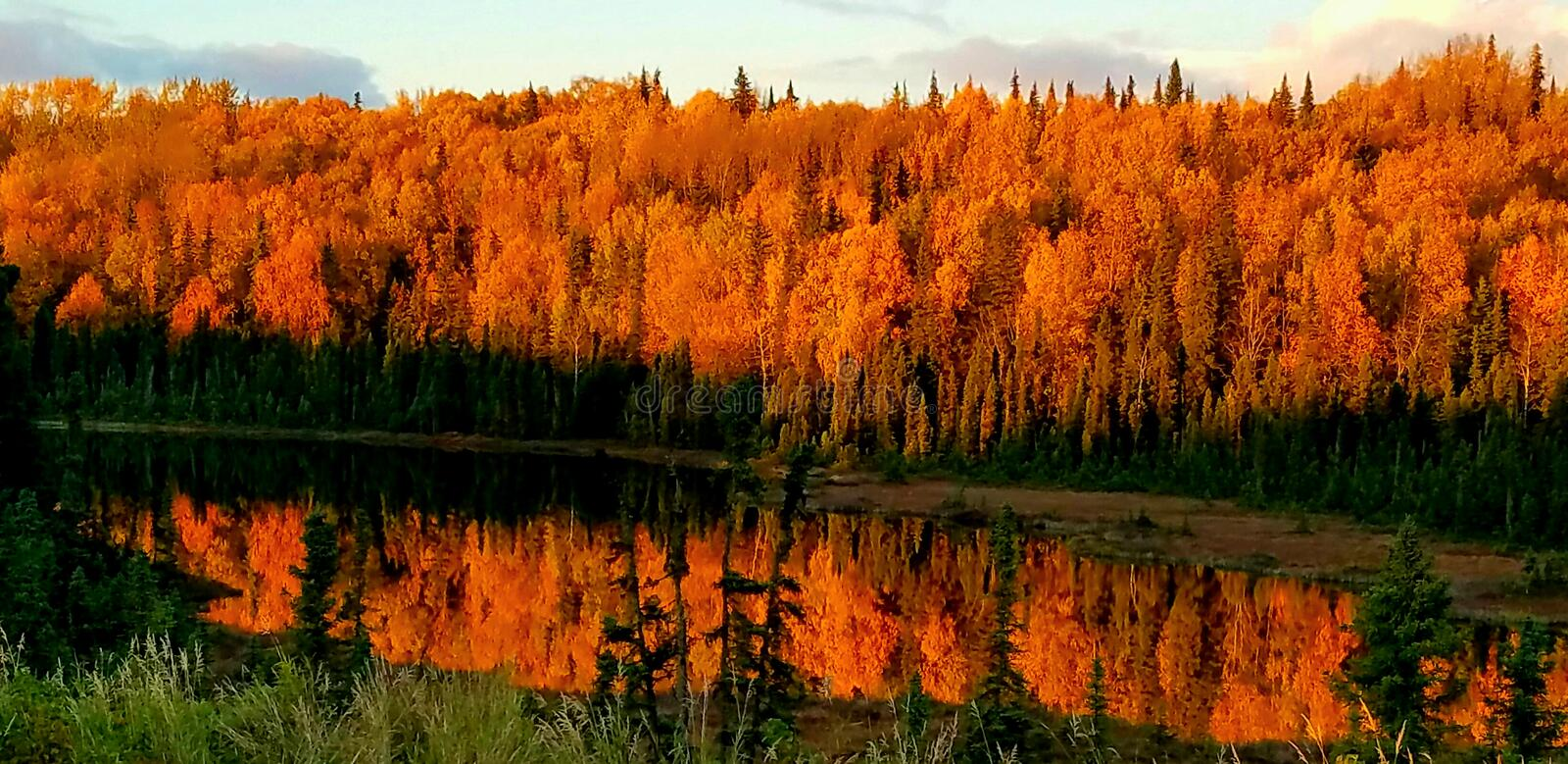 Autumn in kasilof alaska. You can see the autumn foilage in alaska royalty free stock image