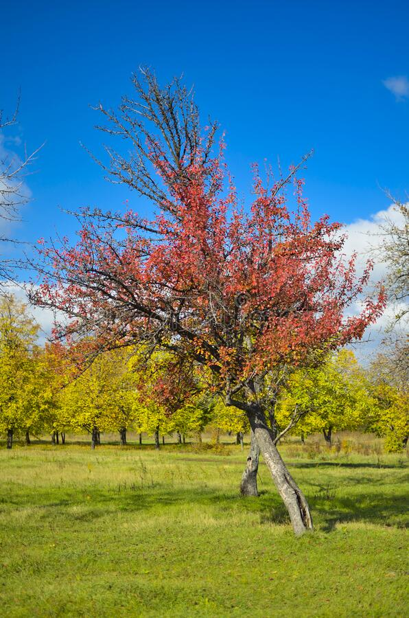 Autumn Kharkov park pleasing to the eye with its colors.  royalty free stock images