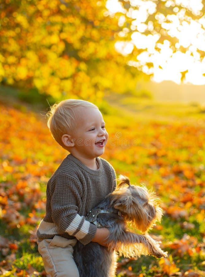 Autumn Kids Niño hermoso que juega con su terrier de Yorkshire en parque Disfrute del otoño con su amigo Real imágenes de archivo libres de regalías