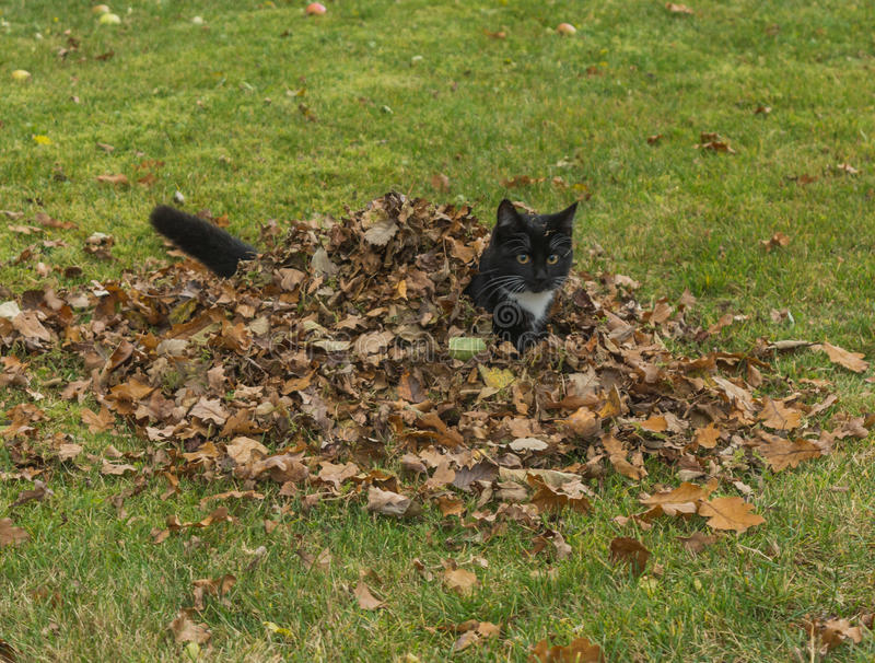Autumn Kitten lizenzfreie stockfotografie