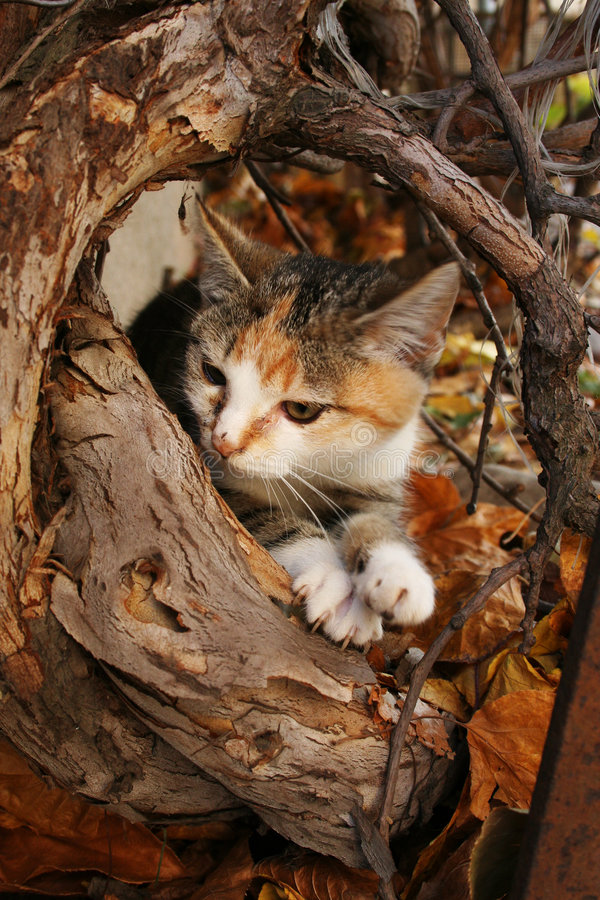 Autumn kittens. In colorful leafs stock photo